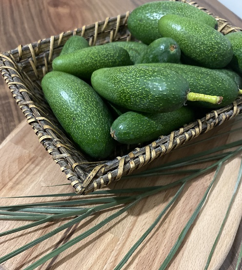 organik bebek avokado