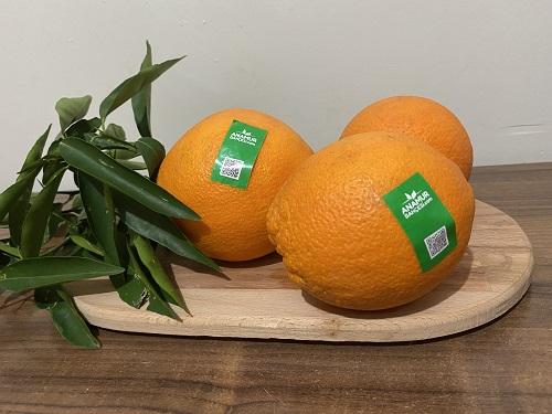 organik portakal
