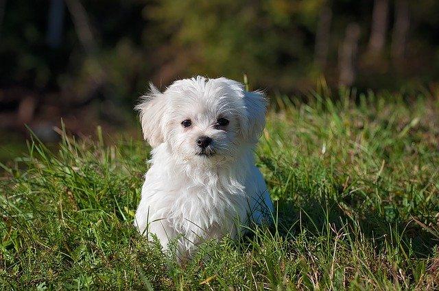 yavru köpek